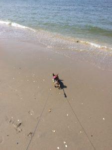 Klein hondje, groot strand